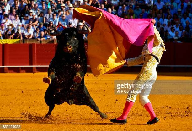 Spanish matador Pablo Aguado performs a pass with capote on a bull during a bullfight at the Maestranza bullring in Sevilla on September 23 2017 /...