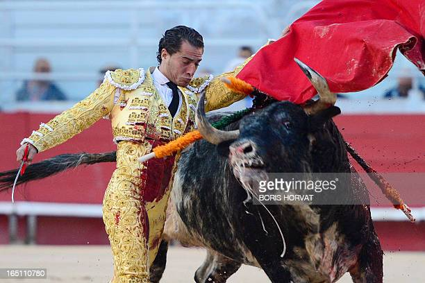 Spanish matador Yvan Fandino performs a pass on a Spanish Torrestrella bull during the spring feria on March 30 2013 in Arles southern France AFP...