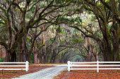 Spanish Moss, Wormsloe, Savannah, Georgia, America