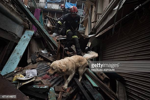 Spanish rescue workers with a rescue dog look for earthquake survivors among debris in the Nepalese capital Kathmandu on April 28 2015 Hungry and...
