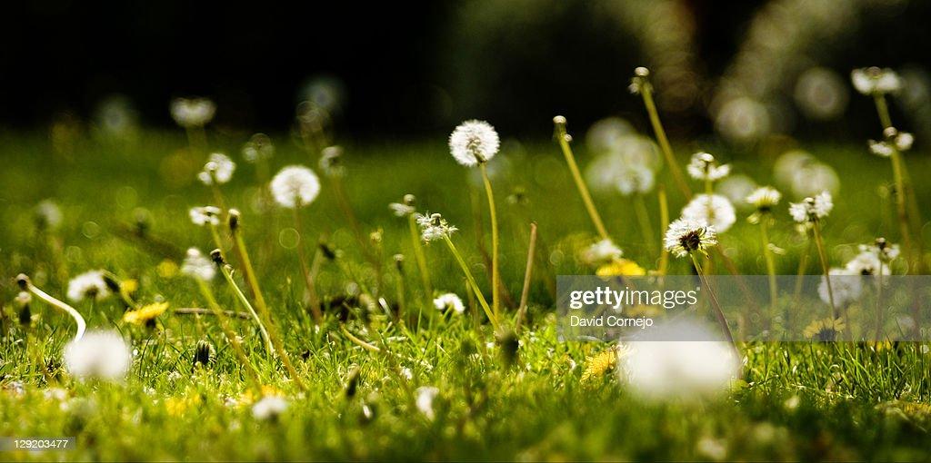 Spanish spring : Stock Photo