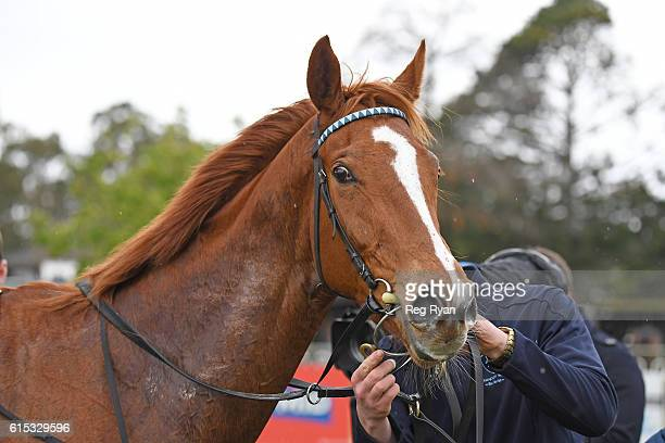 Spanner Head wins Stawell farm Supplies FM Maiden Plate at Stawell Racecourse on October 18 2016 in Stawell Australia