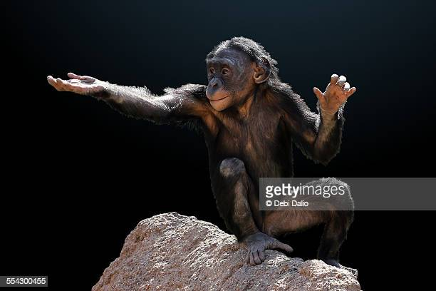 Spare Change Bonobo