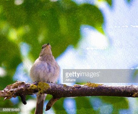 Gorrión en un árbol verde : Foto de stock