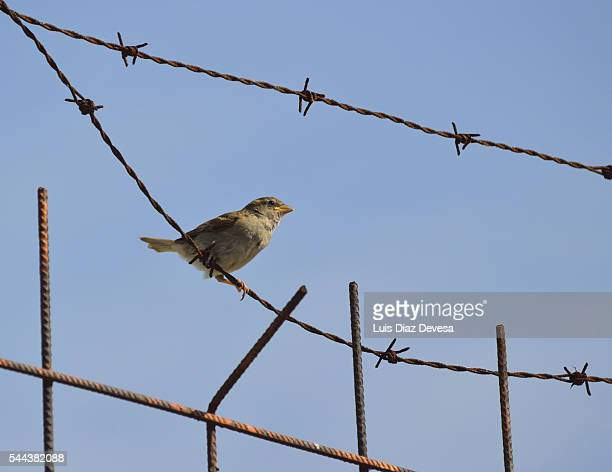 sparrow over barbed wire at Refugee Camp