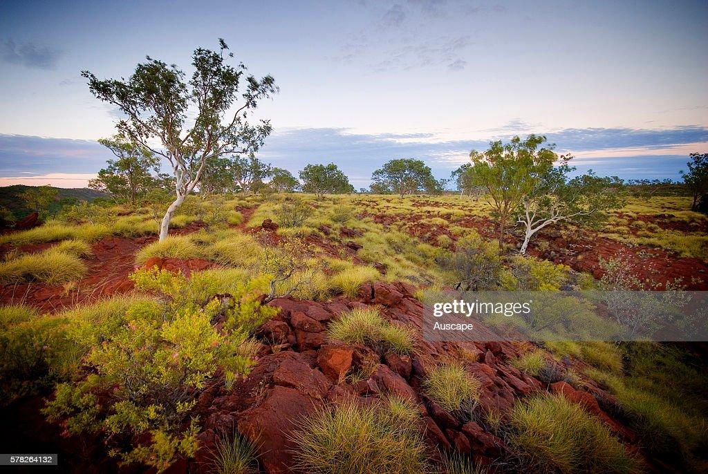 Sparse vegetation on Constance Range Boodjamulla Lawn Hill National Park northwest Queensland Australia