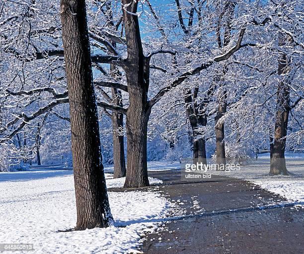 Spazierweg im winterlichen ClaraZetkinPark in Leipzig von starken Alteichen gesaeumt