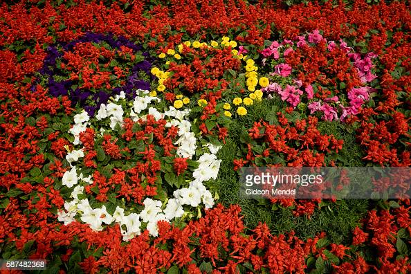 A special festive floral display in the Financial Street of Beijing shows the Olympic emblem made from a multicoloured range of flowering plants This...