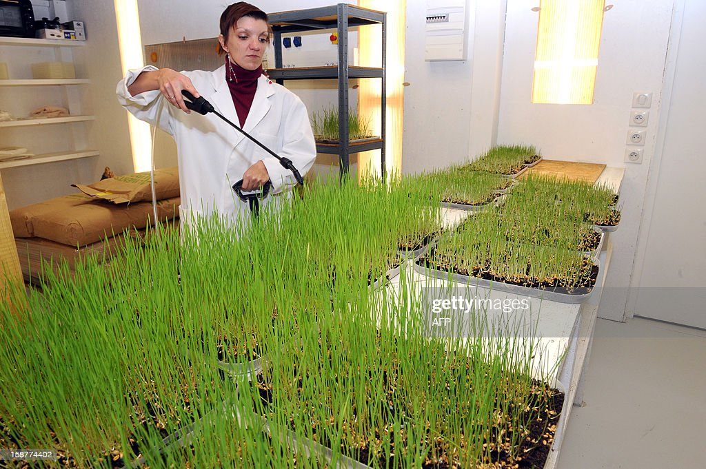 A specialist sprays seeds at Micronutris, a company selling and producing high quality food insects born and raised in France, in Saint-Orens-de-Gameville on December 27, 2012. The company also develops innovative food products based on insects which are fed from foods derived from organic farming.