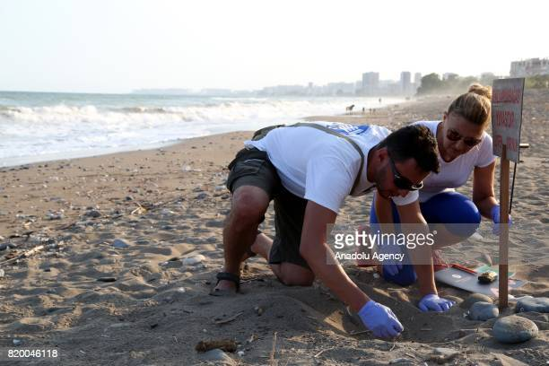 Specialists help a newly hatched Loggerhead turtle to make its way to the Mediterranean Sea at Davultepe District's beach in Mersin Turkey on July 19...