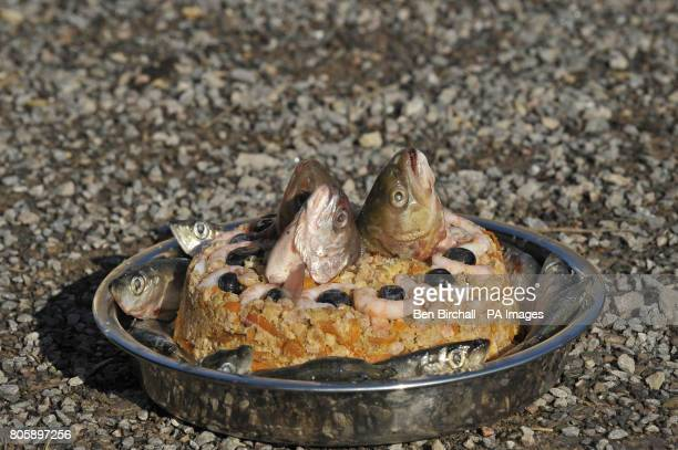 A specially prepared birthday cake containing chicken mince carrot apple sprats prawns blueberries and topped off with trout heads as makeshift...