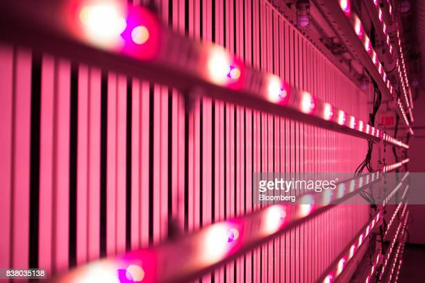 A specialty lighting system is seen on an empty grow wall inside a modular farming unit at Modular Farms Co headquarters in Brampton Ontario Canada...