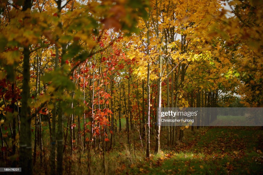 Specimen trees begin to take on autumnal colours at a tree plantation in the Cheshire countryside on October 21, 2013 in Knutsford, United Kingdom. The mild weather in the United Kingdom has delayed Autumn by up to two weeks according to statistics by The Woodland Trust. Members of the public have submitted their observations to the trust's Nature's Calendar which shows that the traditional Autumn tints are finally appearing on ash, elder, oak and horse chestnut.