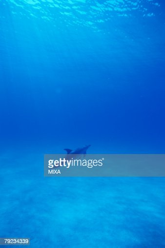 A spectacular view of dolphin swimming underwater : Stock Photo
