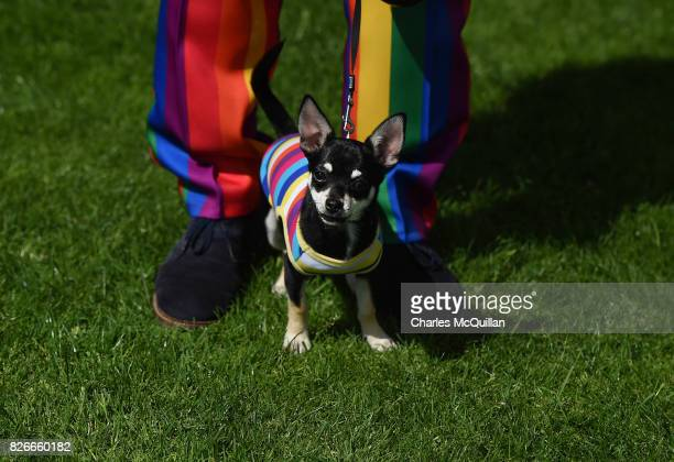 A spectator wearing a rainbow suit and his dog watch on as Belfast Gay Pride takes place on August 5 2017 in Belfast Northern Ireland The province is...