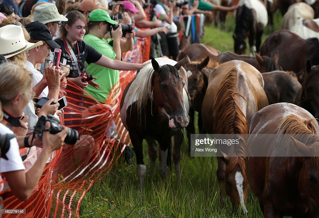 Spectators pet wild ponies after they swam across Assateague Channel during the annual pony swim event from Assateague Island to Chincoteague on July...