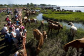 Spectators view Assateague Ponies that swam across the Assateague channel from Assateague Island to Chincoteague Island This is the 87th year of...