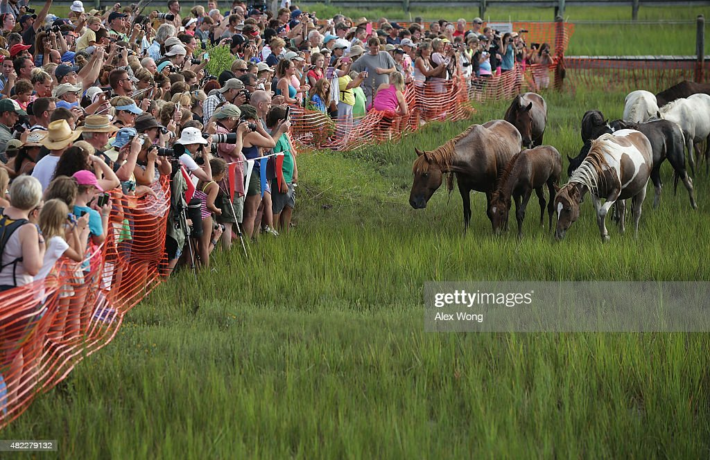 Spectators watch wild ponies come ashore from the Assateague Channel during the annual pony swim event from Assateague Island to Chincoteague on July...