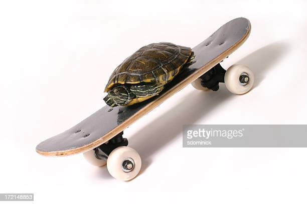 Speedy Turtle