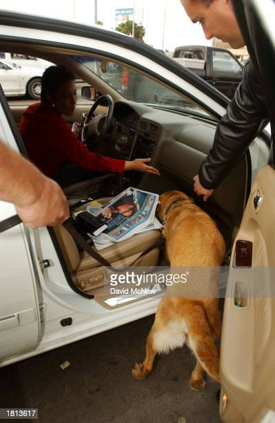 Spenser a drugsniffing yellow lab sniffs out a substance hidden in the panels of a car entering the US from Mexico that later tested positive for...