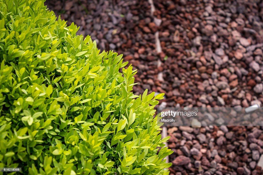 Spherical bush : Photo