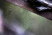 The spider, a great architect!