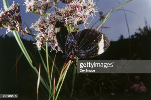 Spider consuming Butterfly, close-up : Stock Photo