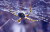 The morning dew is covering this spider and its web.