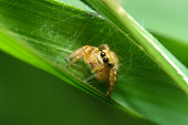 Spider in green leaf is use in background or wallpaper