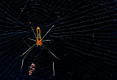Spider with victims, taken with black background