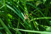 close up of yellow spider in web with green grass in background