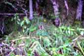 The spider sitting in the center of the web. Photo taken in the evening in the forest.