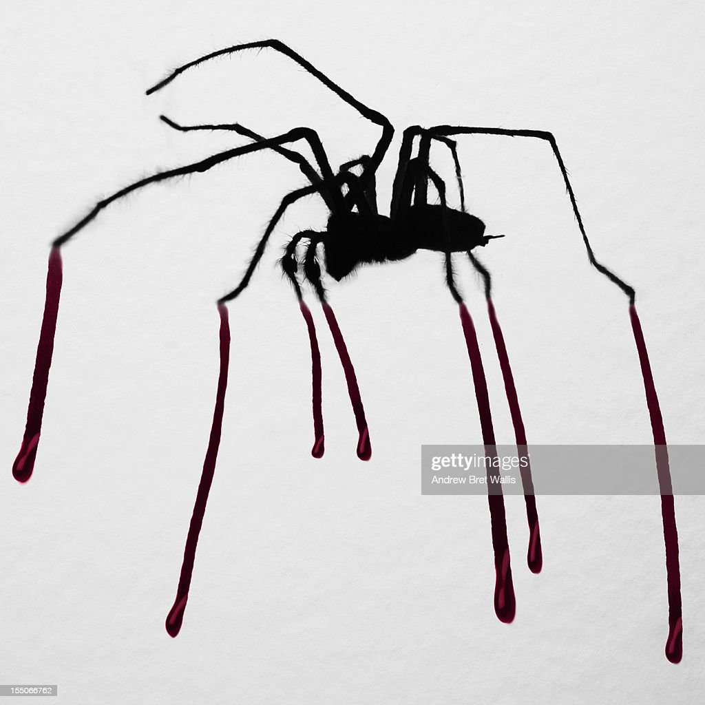 A spider on paper drips dark blood across the page : Stock Photo