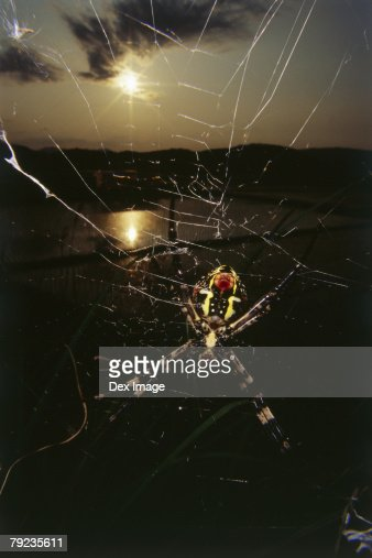 Spider on web at sunset, close up : Stock Photo