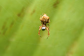Spider on web eatting bug  use in background image or wallpaper image