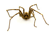 spider on white background