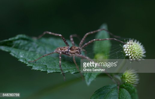 A spider perched on a green leaf in Xilitla, San Luis Potosi, Mexico