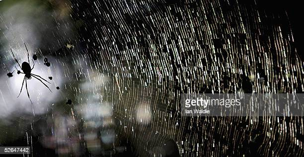 A spider sits in its web April 19 2005 in Sydney Australia Spiders all over the city have enjoyed a burst of activity during a concentrated season...