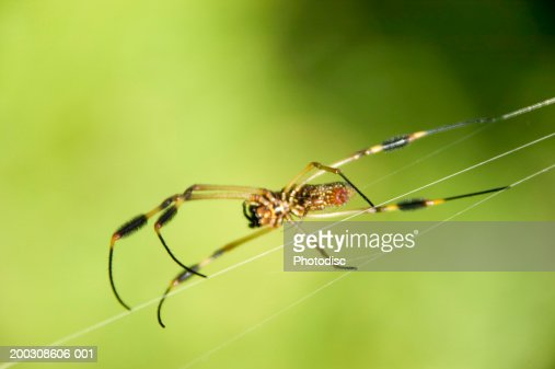 Spider spinning web, close-up : Stock Photo