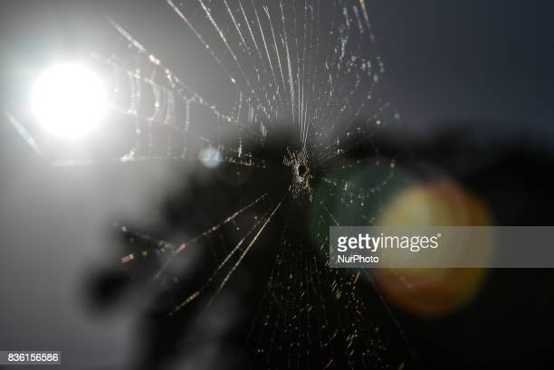 A spider waiting in her net for prey in Artaki on Euboea on August 20 2017