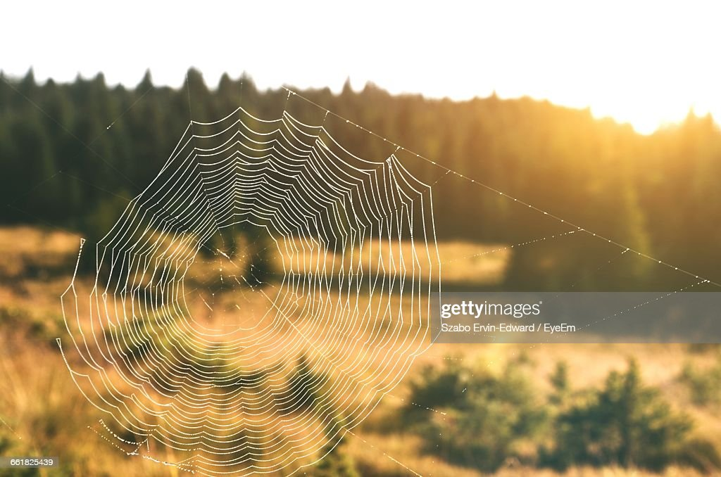 Spider Web By Field Against Sky At Morning