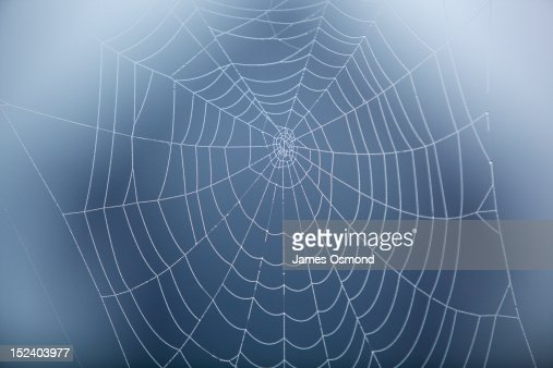 Spider Web covered in morning dew.