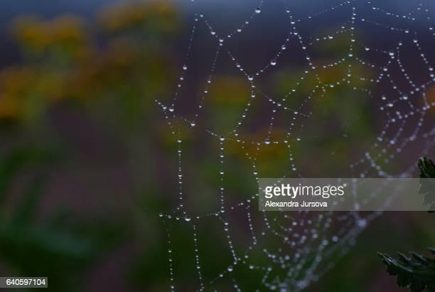 Spider web - detail