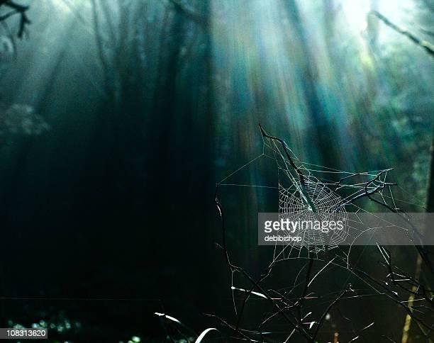 Spider Web In The Dark Forest