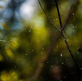 Spider web daytime woods