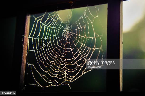 Spider web, Rio Grande do Sul, Brazil.