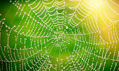 Detail of spider's web on natural background