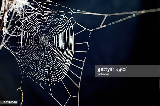 spider web. XXXL