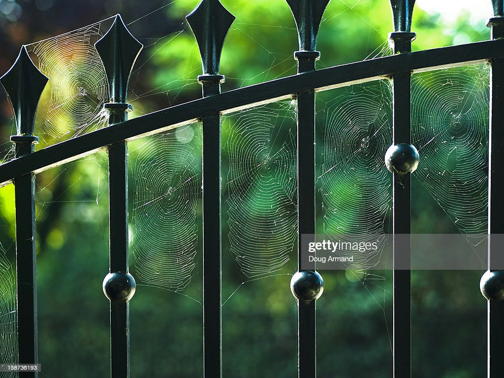 Spider webs attached to a metal garden gate : Stock Photo