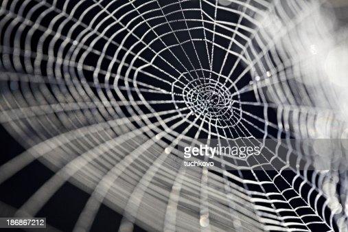 Spider web.XXXL